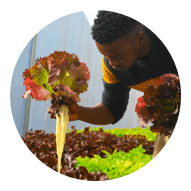 Youth planting lettuce